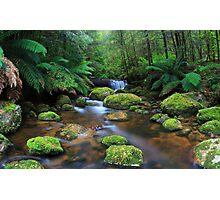 Tranquillity on Koala Creek Photographic Print