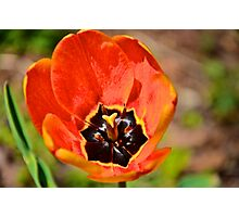 Flowers of spring Photographic Print