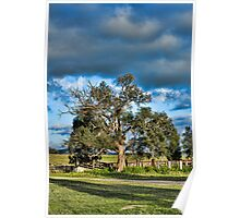 Tree at Cattle Yards. (Bonshaw NSW) Poster