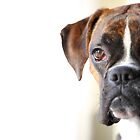 boxer portrait by JanaBehr