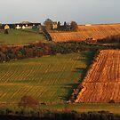 Rural field patterns by jchanders