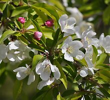Apple Blossom by CreatorsBeauty