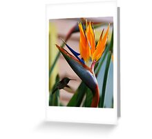 Hover Greeting Card