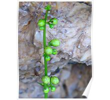 furled buds Poster