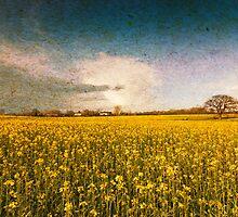 Turn of Summer by Nicholas Jermy
