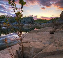 The Watcher - Great Falls, MD by Matthew Kocin
