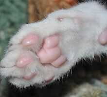 Kittens paw . by CanyonWind