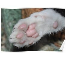 Kittens paw . Poster