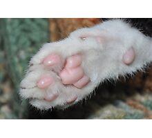 Kittens paw . Photographic Print