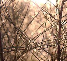 my casuarina thicket by Naia