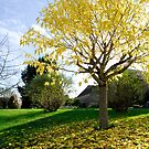 Autumn in Les Arques by triciamary