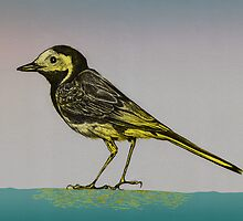 Wagtail by BawbeeRok