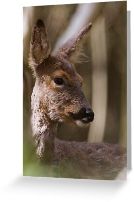 Roe Doe Through the Trees by Neil Bygrave (NATURELENS)