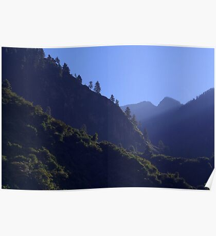 Pines in the Morning Light near Dharapani Poster