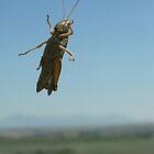 Montana Hopper by snhood
