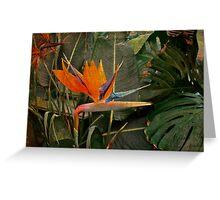 Bird of Paradise Flower - Crane Lily - Strelitzia reginae Greeting Card