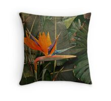 Bird of Paradise Flower - Crane Lily - Strelitzia reginae Throw Pillow