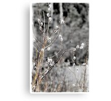 Natural Beauty In Nature Canvas Print