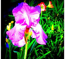 Spring Is Here! Photographic Print