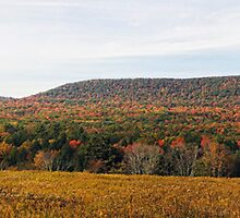 Autumnal Panorama by Aaron Campbell