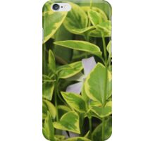 Green Plants iPhone Case/Skin