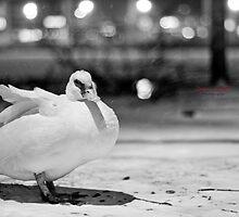 Muscovy Duck In The Snow  by DrewWebbPhoto