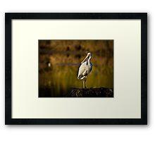 Golden Spoonbill Framed Print