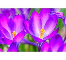 Spring in Denver Photographic Print
