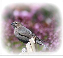 Backyard Bird Photographic Print