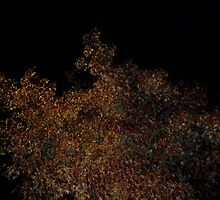 Tree At Night by mikeyrioux