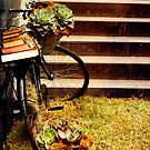 The succulent bike by chasingsooz