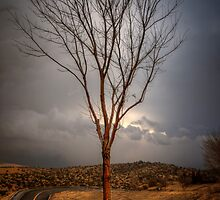 Roadie by Bob Larson
