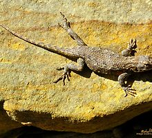 Sunning Fence Lizard by michaelasamples