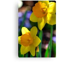 Daffodils in Denver Canvas Print