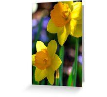 Daffodils in Denver Greeting Card