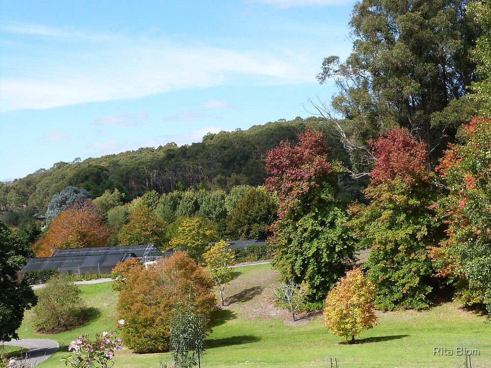 'Sloping lawns and Autumn colour!' Mount Lofty Botanic Gardens, Adelaide. S.A. by Rita Blom