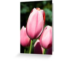 Pink Tulips with Whtie and Salmon Accents Greeting Card