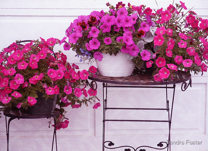 Pretty Petunias by Sandra Foster