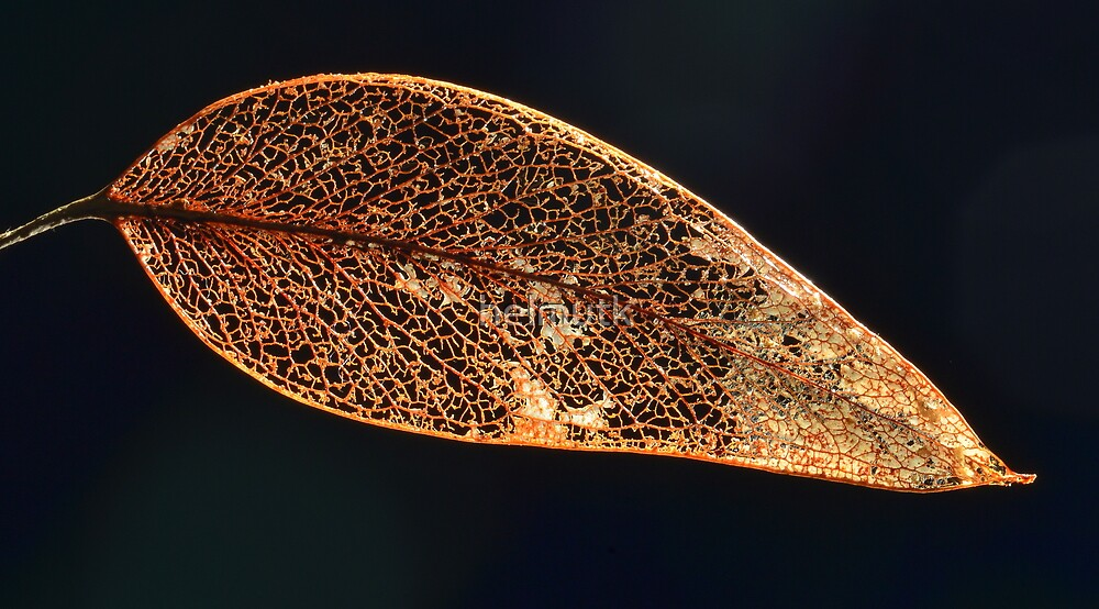 """ Gum Leaf Abstract "" by helmutk"
