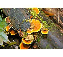 Australia, Victoria, Otway Ranges, rainforest 2 Photographic Print