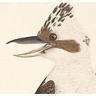 Kookaburra by madewithslnsw