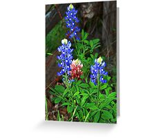 Texas State Flower ~Touch of Aggie Maroon Greeting Card