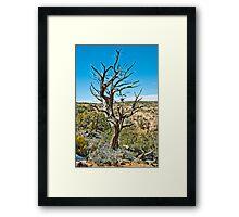 Tree in Navajo national monument Framed Print