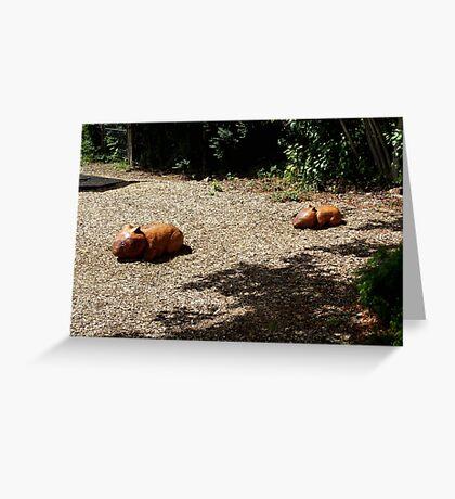 Wombat Sculptures Greeting Card