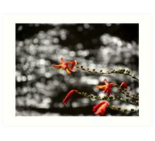 Flowers at the Yarra, Warburton, Victoria Art Print