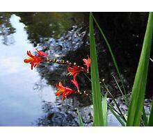 Flowers at the Yarra, Warburton, Victoria Photographic Print