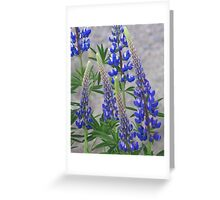 Shimmering Lupin Light Nr 2 Greeting Card