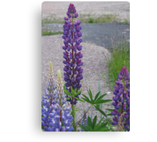 Shimmering Lupin Light Nr 3 Canvas Print
