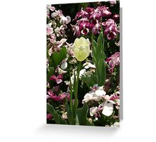 Tulip in a Flowery Bed Greeting Card