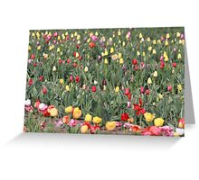 tulips galore Greeting Card